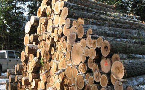 木材进口.jpg