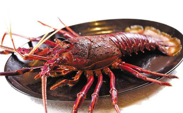 16澳洲龙虾d.jpg