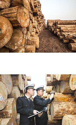 木材进口流程背景图.jpg